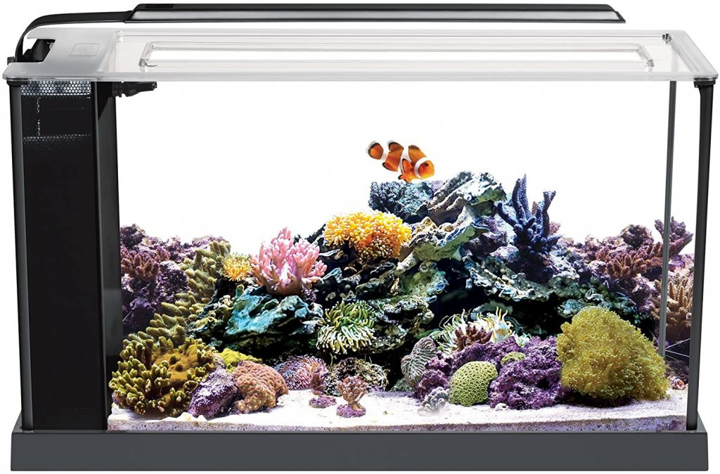 Fluval 10528A1 Evo V Fluval Aquariums buying guide -Marine Aquarium Kit, 5 gal,