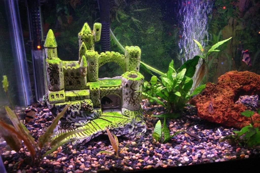 Best Gallon Fish Tanks